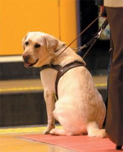 Perros guías, Fundación ONCE